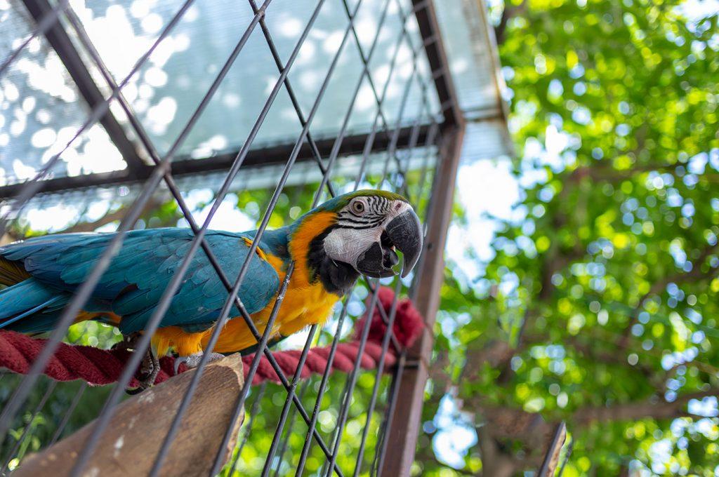 Voliera con pappagallo nel giardino dell'Hotel del Sole